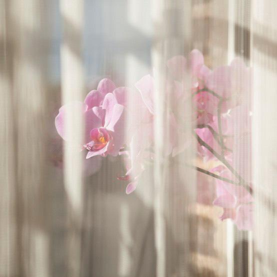 http://www.lux-fotografie.de/files/gimgs/th-32_007_MG_7944.jpg
